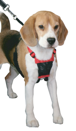 Sporn Non Pull Harness on Dog Car Safety Harness